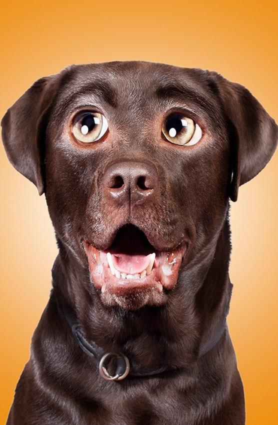Comic-Retusche Hund Cooper
