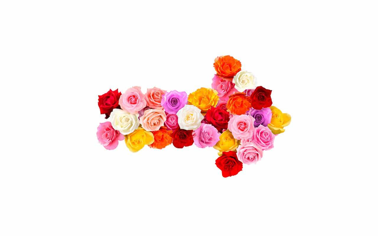 Blumenretuschen für Praskac Gartencenter Tulln